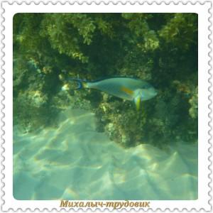 podvodnii_mir_1