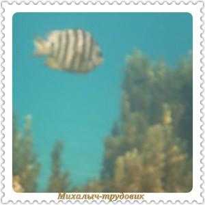 podvodnii_mir_2